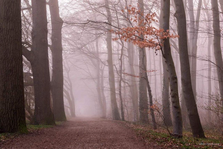 Vreme: Maglovito jutro, preko dana umereno oblačno