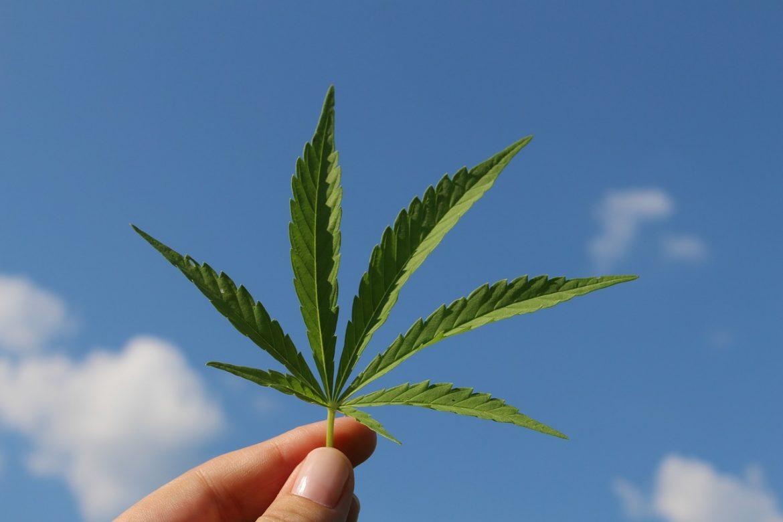 Agencija UN uklonila kanabis i smolu kanabisa iz kategorije najopasnijih narkotika