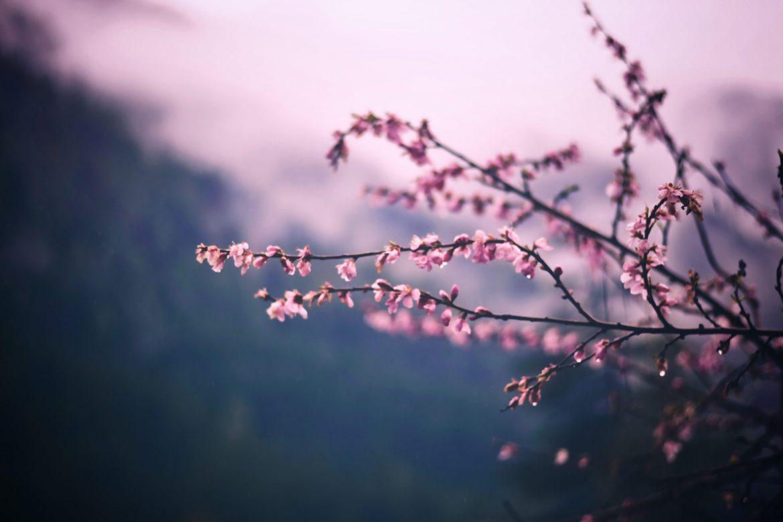 Proleće kalendarski počinje sutra