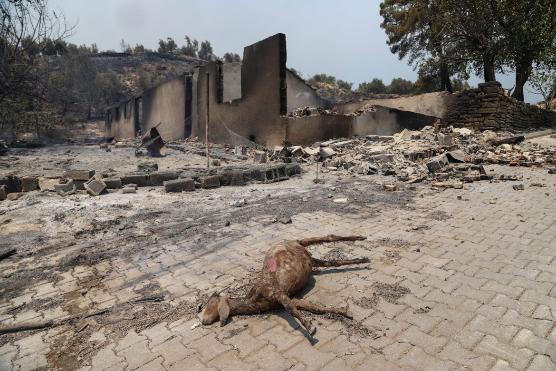 Požar u Antaliji pod kontrolom