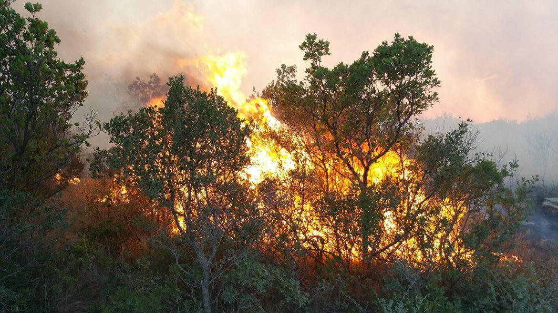 Požar na Mokroj Gori, domaćinstva nisu ugrožena