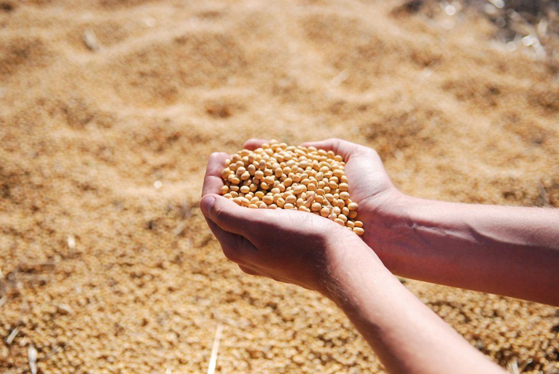 Soja poskupela 75 odsto u odnosu na 2020. godinu